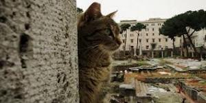 gatto-di-roma-300x150