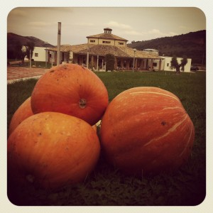 Le zucche vegliano su Villa Jamele