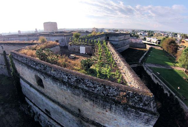 Il vigneto sul castello di Copertino (Lecce) della cooperativa Cupertinum