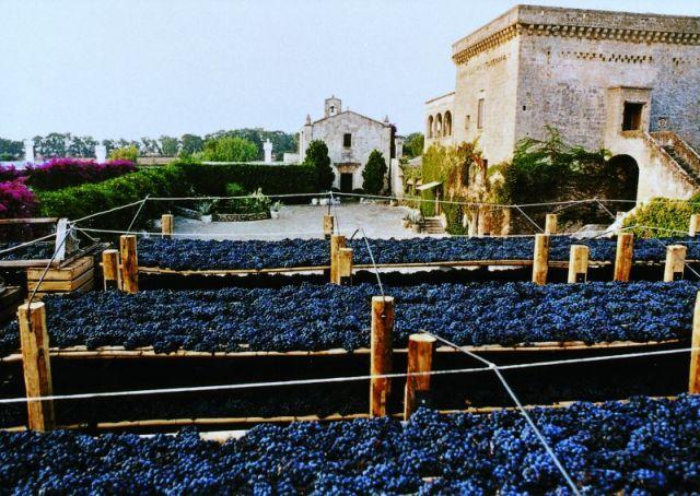 Vendemmia - Agricole Vallone