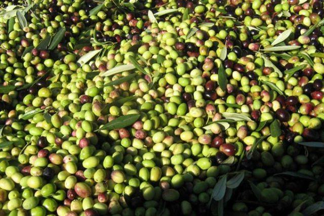 a-olio-extra-vergine-di-oliva-7