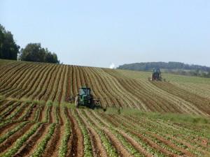 Tractors_in_Potato_Field