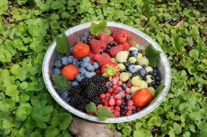 frutti di bosco forni avoltri