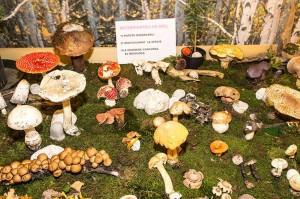 budoia funghi
