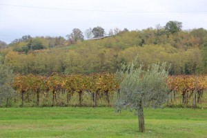 colori autunno manzano