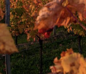 buri autunno