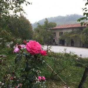 rosa abbazia rosazzo