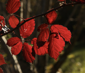 bruno zuliani foliage in prat