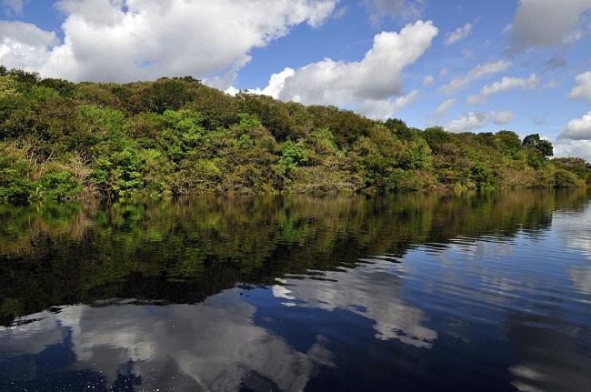 6 foresta amazzonica brasiliana