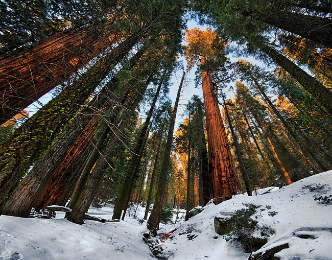 8 sequoia national forest