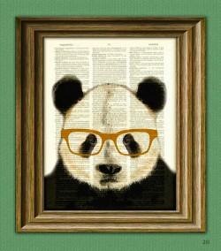 L'occhio del Panda