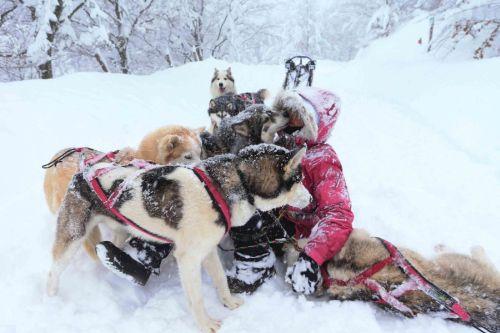 I cani fanno la festa alla loro musher