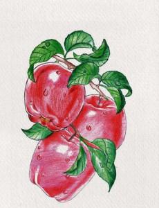 illustrazione di Matilde Caratozzolo