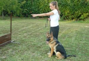 corso-di-addestramento-per-cani-e1471040305273
