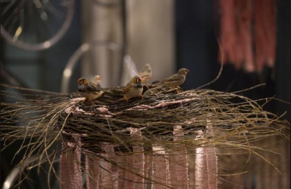 Il Milano Design Award 2015 va a Il sentiero dei nidi di ragno, l'installazione di cesti intrecciati dagli artigiani. Di Antonio Marras e Segno Italiano