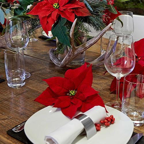Per una tavola tradizionale la classica Poinsettia di colore rosso