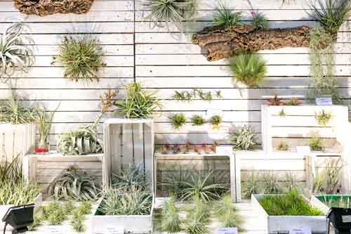 My Plant & Garden, dal 24 al 26 febbraio a Rho Fiera, Milano