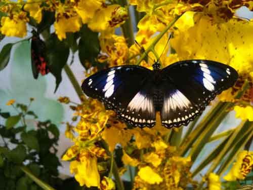 La casa delle farfalle, dal 12 marzo al 30 giugno, Modica, Ragusa