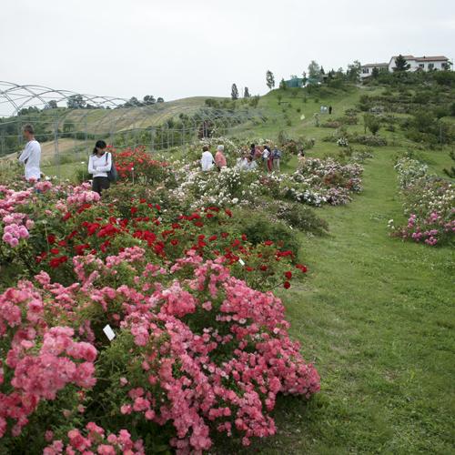 Giardino Museo della Rosa Antica