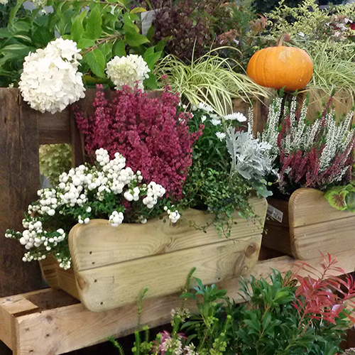 Gli appassionati di giardinaggio hanno l'occasione di conoscere il fascino di nuove varietà di piante come le graminacee, le piante da bacca e da frutto, erbacee perenni, e far comprendere la ricchezza di un giardino che cambia durante le quattro stagioni