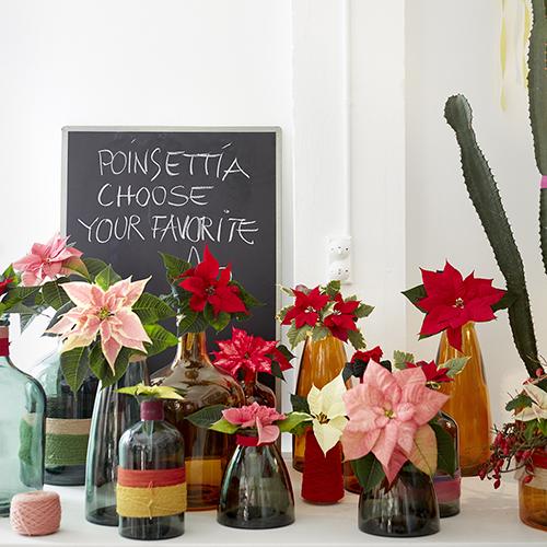 Stella Di Natale In Casa.Decorare Con Le Stelle Di Natale Le Idee Fai Da Te Casa Design