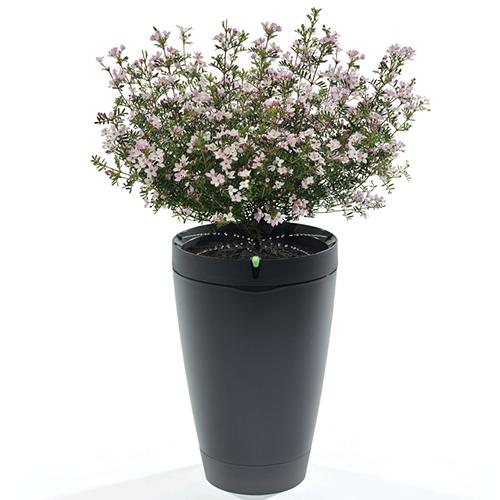 Con un collegamento Bluetooth e un'app dedicata, il vaso Parrot Pot innaffia le piante, anche se si è in vacanza, e ne misura i parametri di crescita