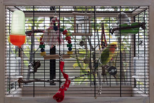 I pappagallini Blu e Jackie