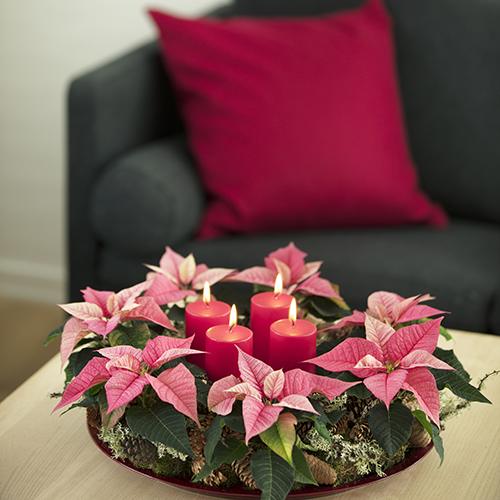 Le quattro tradizionali candele dell'Avvento prendono il posto d'onore al centro della corona. Per realizzarla: avvolgere le Stelle di Natale mini nel muschio, disporle su un vassoio e adornare con ramoscelli e pigne
