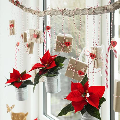 Il calendario dell'Avvento che arreda: un ramo sospeso orizzontalmente davanti alla finestra è arricchito dai piccoli pacchetti regalo e alcune mini Stelle di Natale collocate in vasi di metallo