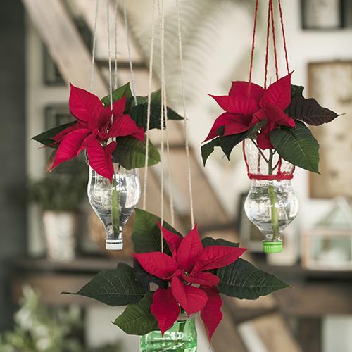 Tagliare le bottiglie vuote a metà con un paio di forbici, avvolgere la parte superiore con nastro colorato o con un cordino e appenderle a testa in giù con dei ganci applicati al soffitto. Avvitare i tappi, aggiungere acqua e i vasi riciclati sospesi sono pronti per contenere le Stelle di Natale rosse