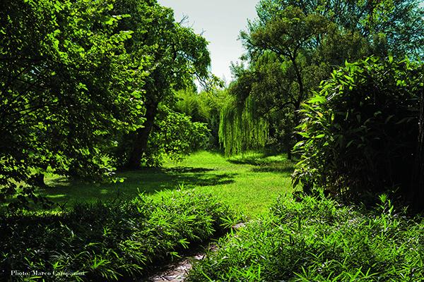 Il giardino privato di Franco Maria Ricci, vicino Parma. In primo piano il bambù nano Phyllostachys pumilus, a destra Indocalamus latifolius dal portamento eretto, sullo sfondo Phyllostachys aurea (foto Marco Campanini)