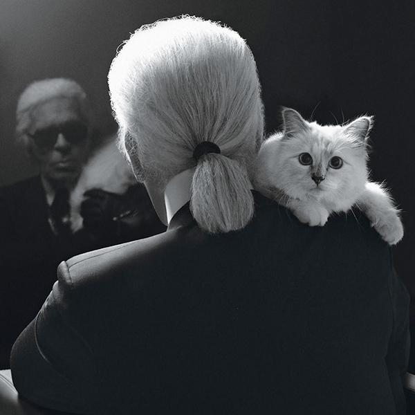 Karl Lagerfeld e la fortunata e viziata gatta Choupette