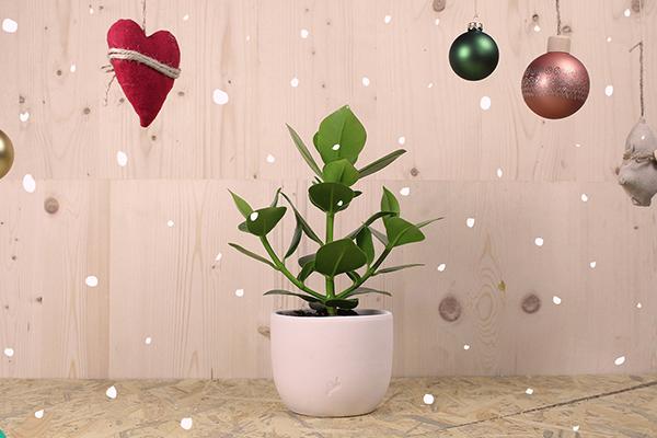 """Per l'amica con il <a href=""""http://design.repubblica.it/2017/05/02/valorizzare-il-giardino-in-un-libro-100-piante-immortali/"""">pollice verde</a>: su <em><a href=""""http://www.flobflower.com"""">www.flobflower.com</a> </em>un assortimento di mille varietà tra bonsai, piante grasse, carnivore, sanseverie, orchidee e bromelie sempre vendute in combinazione con vasi artigianali fabbricati in Italia. La consegna è gratuita e garantita in Italia e in Europa in 48 ore (Flob garantisce la consegna entro Natale su acquisti effettuati entro giovedì 20 dicembre 2018)"""