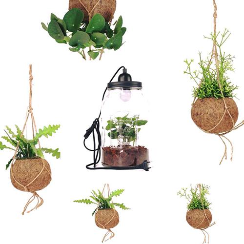 """L'autrice spiega l'importanza di non trascurare il verde in casa andando a trovare Summer Rayne Oakes, la modella americana che coltiva da anni più di 400 piante nel suo appartamento (la foto è di <a href=""""https://www.flobflower.com/it/"""">Flob</a> l'e-com di piante e fiori per l'home decor)"""