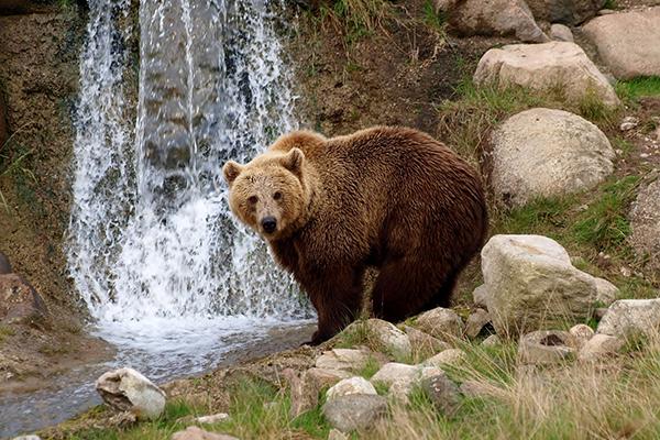 """Allo <a href=""""https://www.skandinaviskdyrepark.dk/"""">Scandinavisk Dyrpark</a>, vicino alla città di Aarhus,  è possibile dormire a contatto con la natura selvaggia. Il parco, che ospita diverse specie di orsi polari, mette a disposizione la """"lavvu"""", una tenda usata dalle popolazioni nomadi della Sandinavia del Nord"""