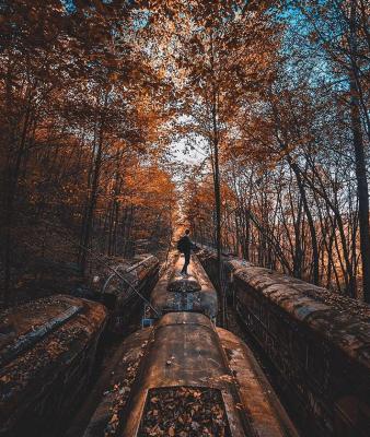 Treni abbandonati in un bosco negli Stati Uniti (dal profilo Instagram di @itsabandoned)