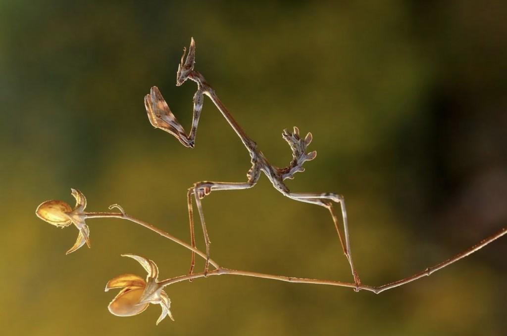 animali mimetici