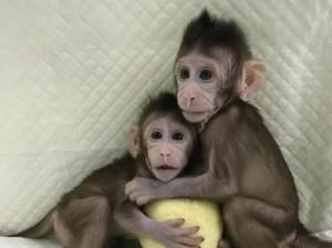 scimmiessss