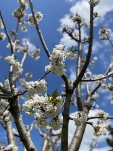 Finalmente primavera!