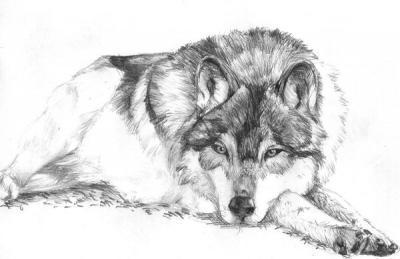 Momenti il mio disegno repubblica scuola il giornale for Disegni a matita di cani